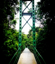 'Stone Bridge' at la Selva Biological Research Station, a sight engraved in the soul of many a neotropical researcher